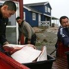 The Inuit Diet