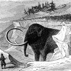 Las diferencias entre los mamuts y los elefantes