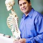 Acerca de los tipos de huesos en el cuerpo