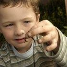 ¿De dónde salen los gusanos?
