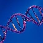 Las diferencias entre la cromatina y los cromosomas