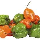 Información nutricional del chile habanero