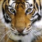 Cómo hacer un tigre de papel