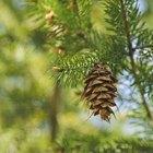 Formas breves para nombres de árboles