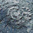¿Qué es un fósil congelado?