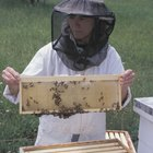 Salaries For Beekeepers