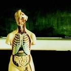 Una manera fácil de aprender Anatomía y Fisiología