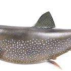 Qué carnada usar para pescar salmón
