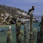 Tipos de peces de agua salada en el golfo de México