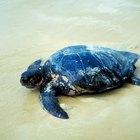 Lecciones sobre tortugas para jardín de infantes
