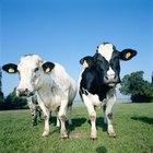 Las ventajas y desventajas de la agricultura mixta