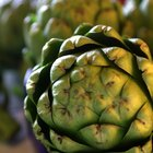 How to Dry Artichokes