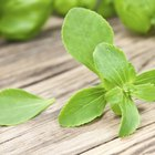 Las calorías de la Stevia