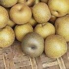 ¿Se come la piel de una pera asiática?