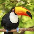 Animales de la selva tropical de Brasil