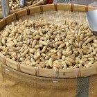 ¿Cuántas calorías se encuentran en cacahuetes hervidos?