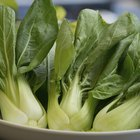 5 Things You Need to Know About the Health Benefits of Bok Choy