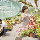 How to Sell Plants From a Home Nursery Business