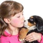 Signos de infección en una mordedura de perro