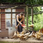 How Much Money Does the Average Chicken Farmer Make?