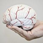 ¿Cuáles son los signos y síntomas de un coágulo de sangre en el cerebro?