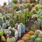 ¿Qué tipos de plantas se encuentran en el desierto seco?
