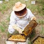 Cómo hacer pasta de azúcar para abejas