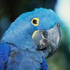 Fauna amenazada del Amazonas