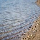 ¿Qué son los llanuras aluviales?
