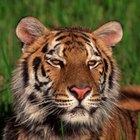 Ventajas del cautiverio de los animales en peligro de extinción