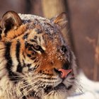 Why People Shouldn't Kill Endangered Animals
