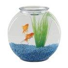 Los mejores peces carroñeros para poner en un acuario