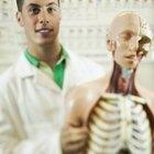 ¿Qué clases se toman antes de ingresar a la carrera de medicina?