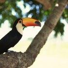 ¿Qué tipo de adaptaciones presentan los animales de la selva húmeda tropical?