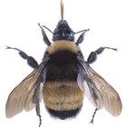 Cómo ahuyentar a los abejorros