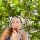 ¿Comer muchas manzanas impide perder peso?