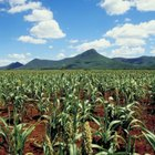 The Effects of Evaporation on Agricultural Production