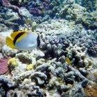 Factores que afectan a los organismos que habitan en los arrecifes de coral