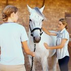 How to Start a Small Horse Massage Business