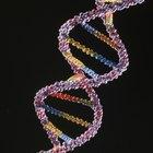 ¿Qué son los nucleótidos y qué alimentos los contienen?