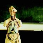 Listado de los cuadrantes del cuerpo humano