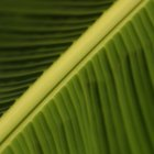 The Nutritional Value of Banana Leaves