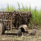 What Liquors Are Made From Sugar Cane?