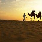 Adaptaciones de los organismos del desierto que conservan agua