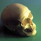 Cráneo de papel plegable