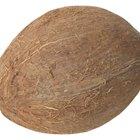 Cómo decorar un coco