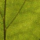 Ventajas de las paredes celulares de las células vegetales en contacto con el agua dulce
