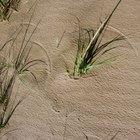 Síntomas indicadores de picaduras de moscas de arena