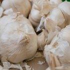 Cómo utilizar el ajo para el dolor de muelas
