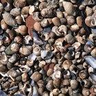 Clasificación de la conchas marinas